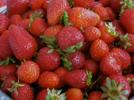 Strawberries for making strawberry jam