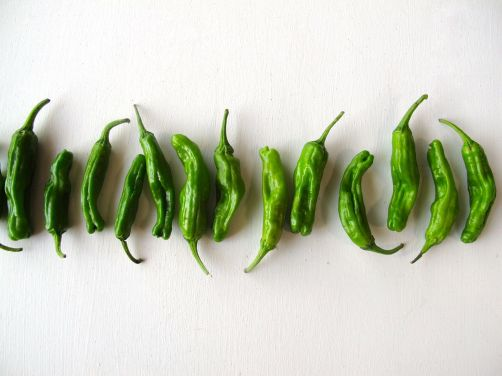 Green Shishito Peppers