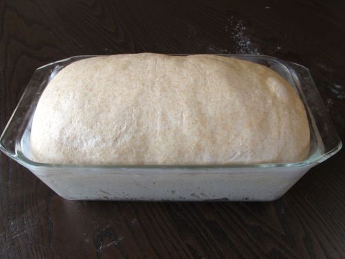 50/50 Sandwich Bread -- Perfectly risen dough, ready for baking